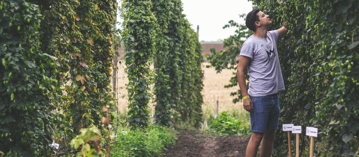Hamarosan érkezik a Hop Harvest 2019!